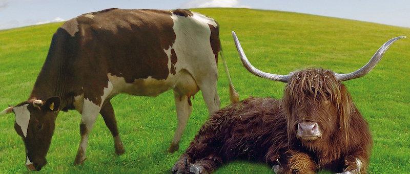 Buchempfehlung: Die Kuh ist kein Klima-Killer