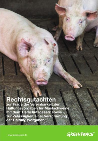 Haltung von Mastschweinen verstößt gegen Tierschutzgesetz und Verfassung