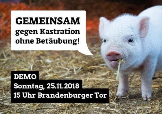 Demo: Gemeinsam gegen Kastration ohne Betäubung!