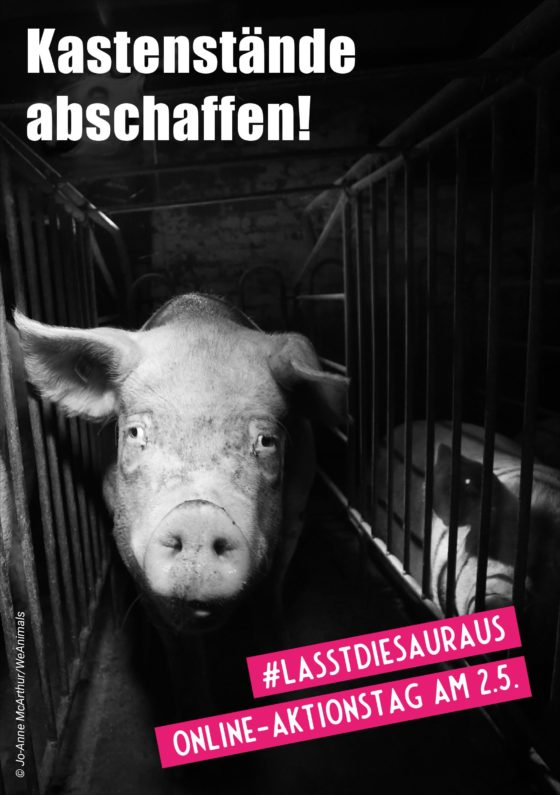 "Flyer zum Online Aktionstag ""Anti Kastenstand"""